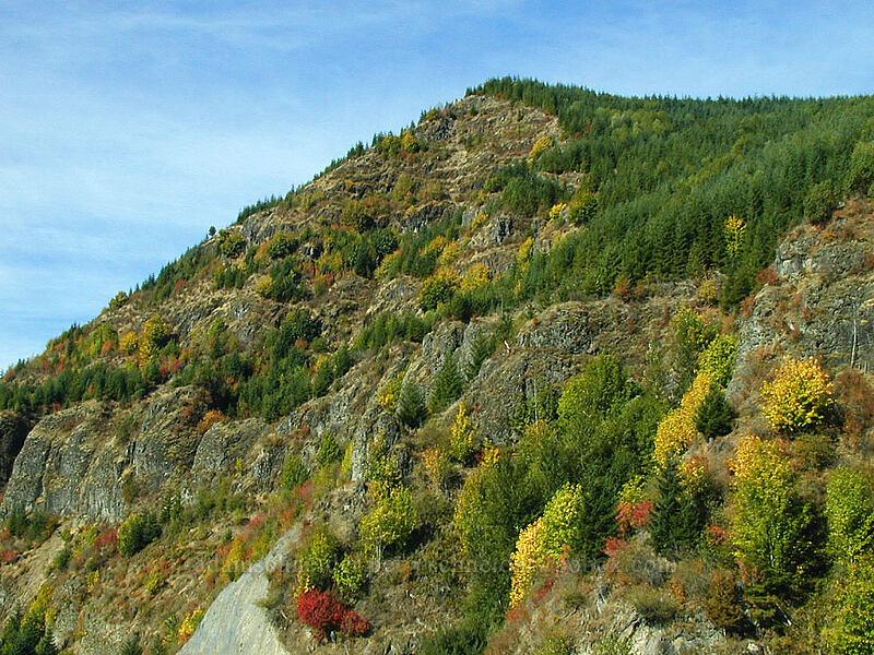 recovering autumn hillside [West of Mt. St. Helens, Cowlitz County, Washington]