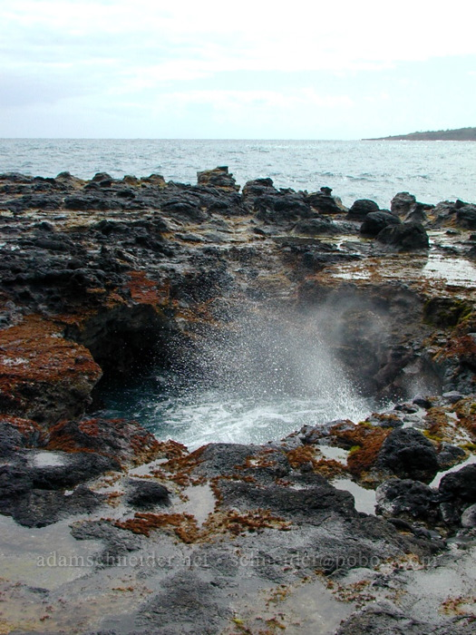 Surging pool [Mokolea Point, Kilauea, Kaua'i, Hawaii]