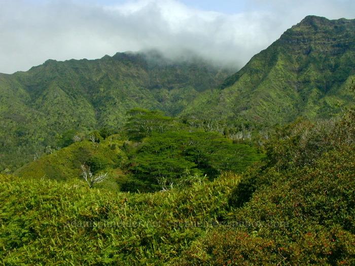 Forested ridges [Kuilau Ridge Trail, Makaleha Mountains, Kaua'i, Hawaii]