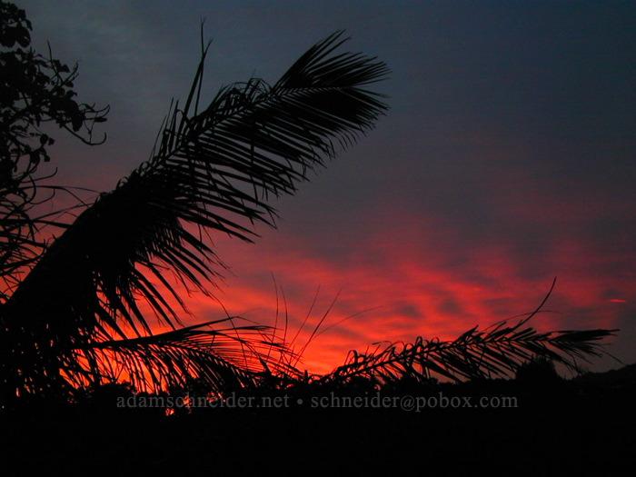 Palm trees at sunset [Wawae Road, Kalaheo, Kaua'i, Hawaii]