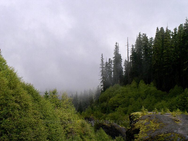 Looking down Lava Canyon [Lava Canyon Trail, Mt. St. Helens N.V.M., Washington]