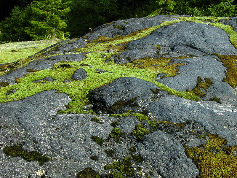 Moss patterns on basalt [Lava Canyon Trail, Mt. St. Helens N.V.M., Washington]
