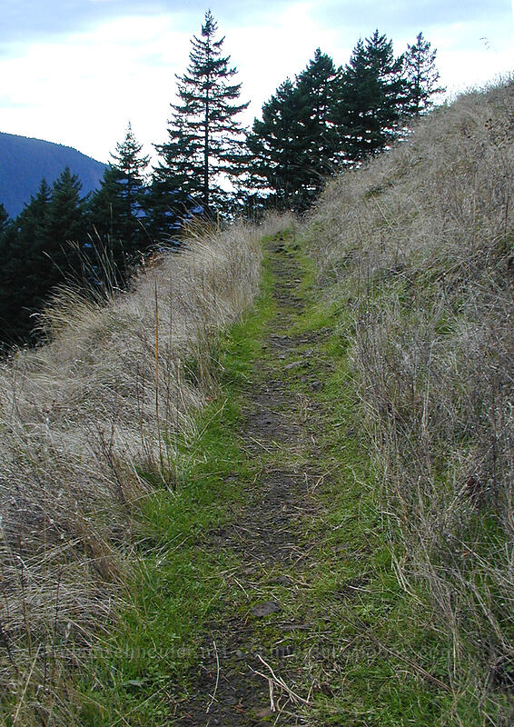 trail through an October meadow [Ruckel Creek Trail, Columbia River Gorge, Oregon]