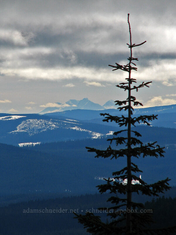 Three Sisters & fir tree [Ghost Ridge, Mt. Hood National Forest, Oregon]