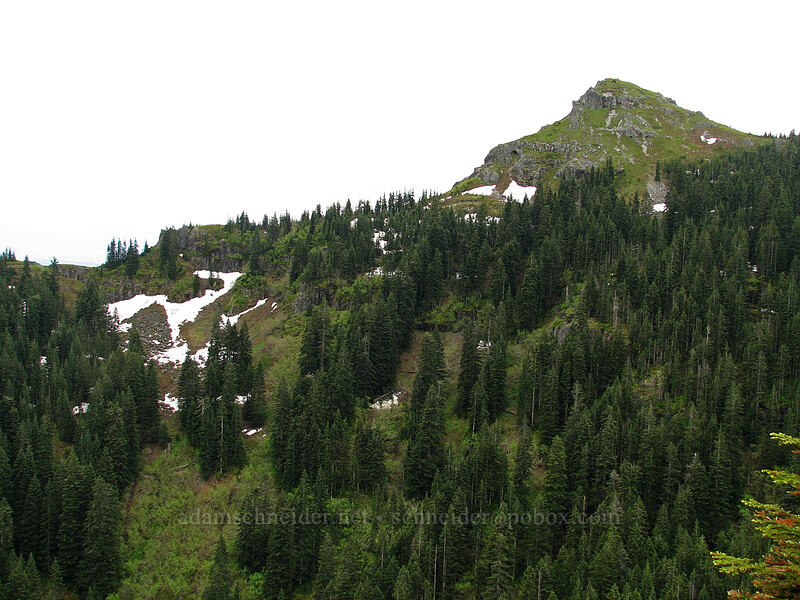 top of Silver Star [Ed's Trail, Silver Star Mountain, Gifford Pinchot National Forest, Washington]
