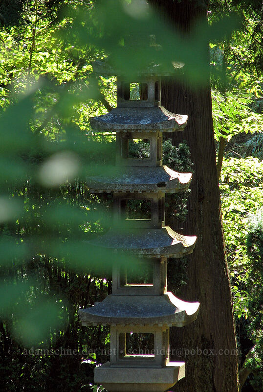 leaves & pagoda [Portland Japanese Garden, Portland, Oregon]
