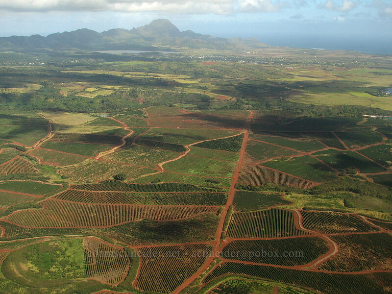 coffee plantations [airplane tour, south of Kalaheo, Kaua'i, Hawaii]
