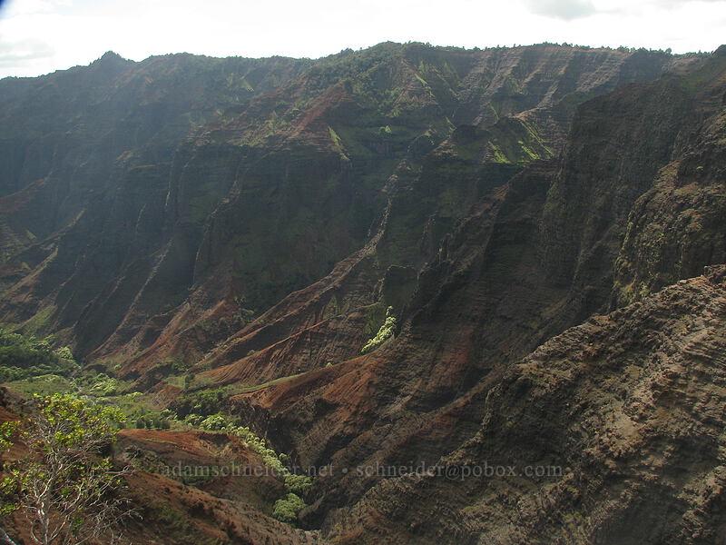 Waimea Canyon [Cliff Trail viewpoint, Koke'e State Park, Kaua'i, Hawaii]
