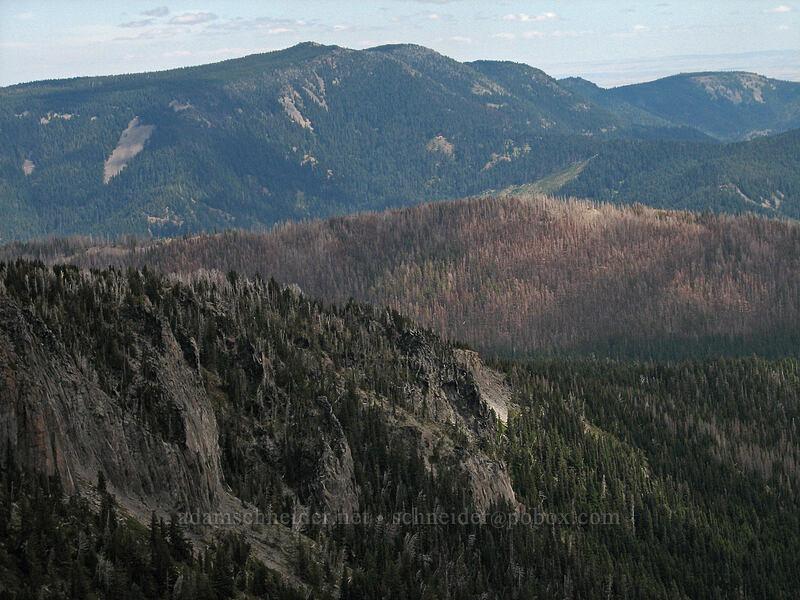 burned forest beyond Gnarl Ridge [Newton-Clark Ridge, Mt. Hood National Forest, Oregon, United States]