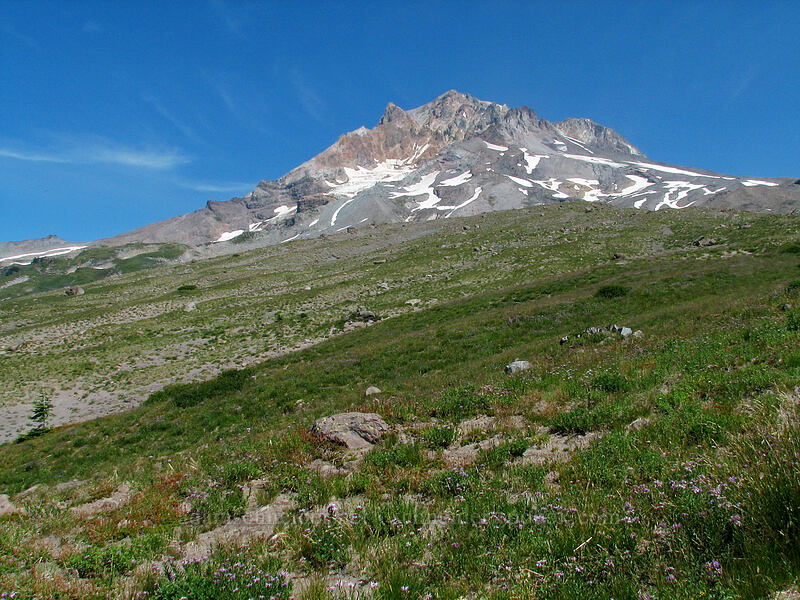 Mount Hood [Paradise Park, Mt. Hood Wilderness, Oregon]