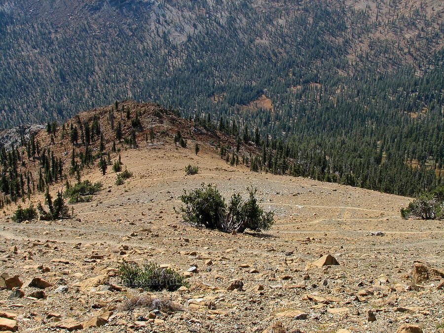 the trail down [Mt. Eddy Trail, Shasta-Trinity National Forest, California]