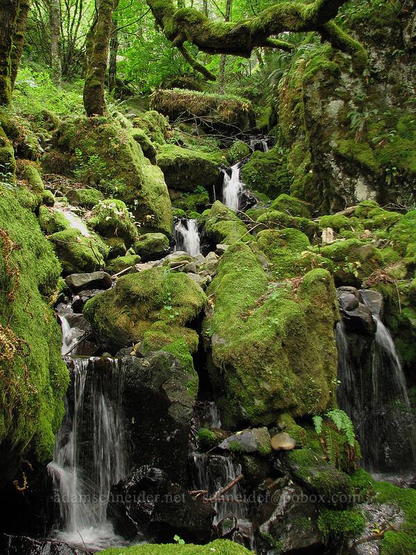 mossy waterfalls [Summit Creek Canyon, Columbia River Gorge, Oregon]