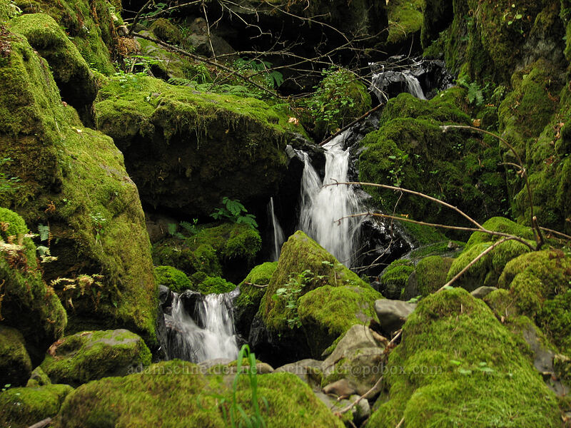 mossy waterfalls [Summit Creek Canyon, Columbia River Gorge, Oregon]
