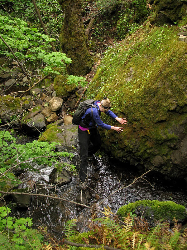 Amber taking the difficult route upstream [Summit Creek Canyon, Columbia River Gorge, Oregon]