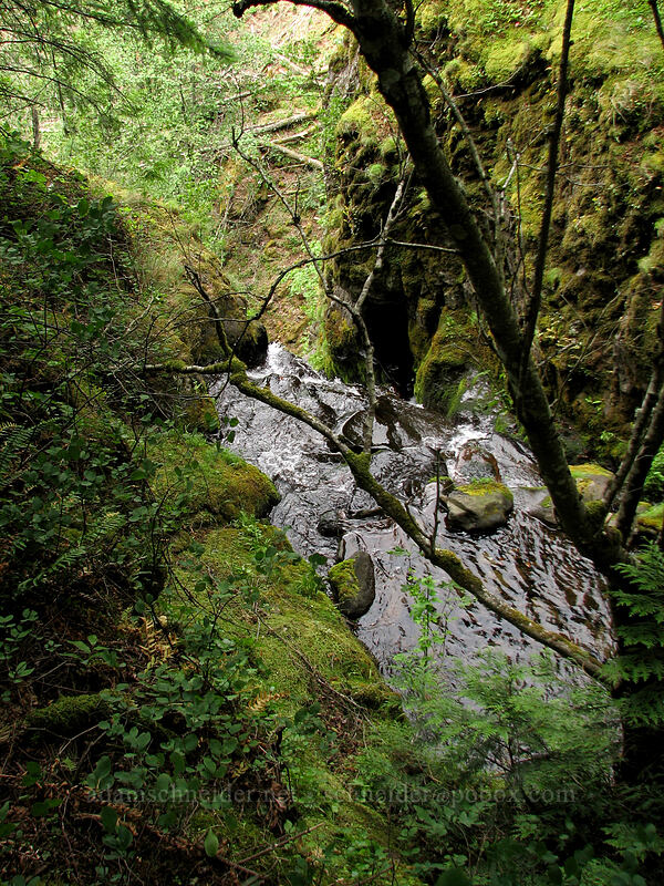 top of Summit Creek Falls [Summit Creek Canyon, Columbia River Gorge, Oregon]