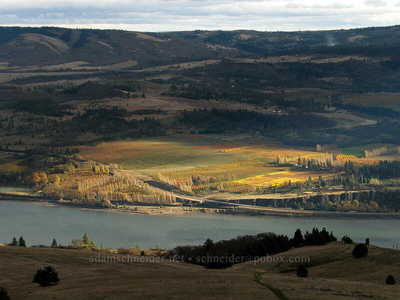sunlight on vineyards [top of Coyote Wall, Klickitat County, Washington]
