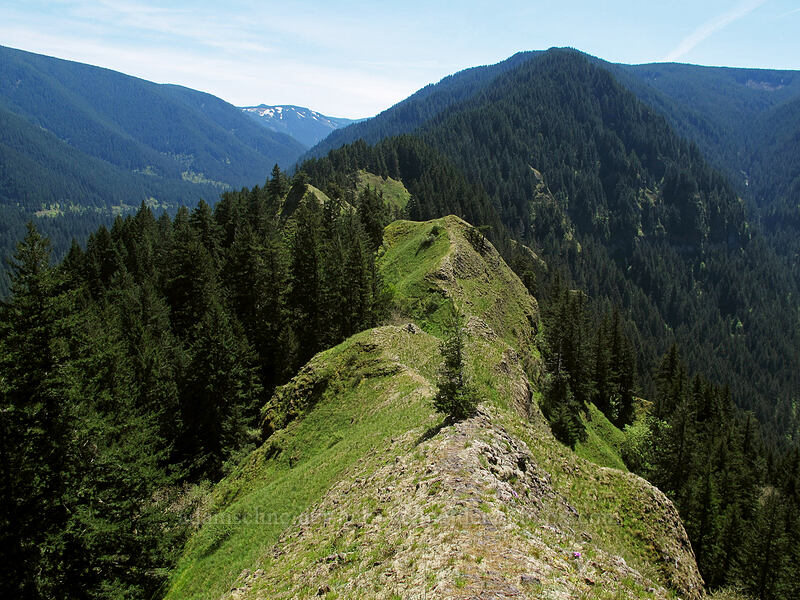 ridge leading south from Munra Point [Munra Point, Columbia River Gorge, Oregon]