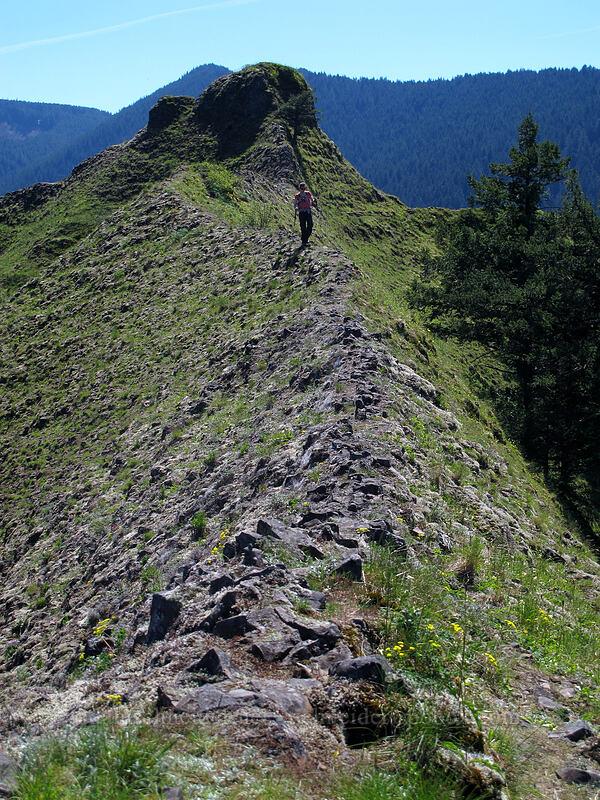 Munra Point's northeast ridge [Munra Point, Columbia River Gorge, Oregon]