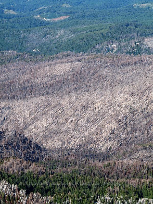 fire damage on Stranahan Ridge [Barrett Spur, Mt. Hood Wilderness, Oregon]