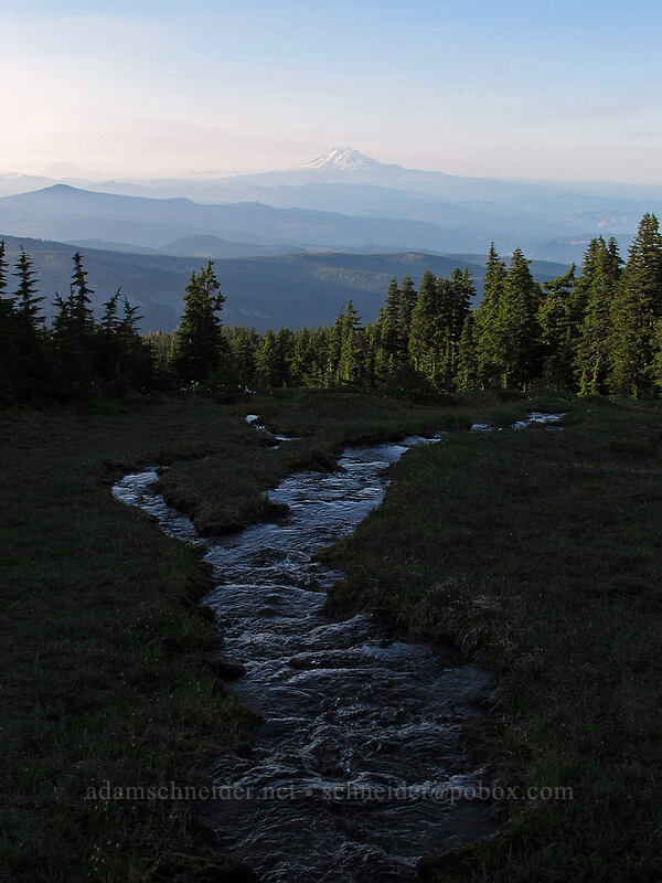Mount Adams & evening meadow [Wy'east Basin, Mt. Hood Wilderness, Oregon]