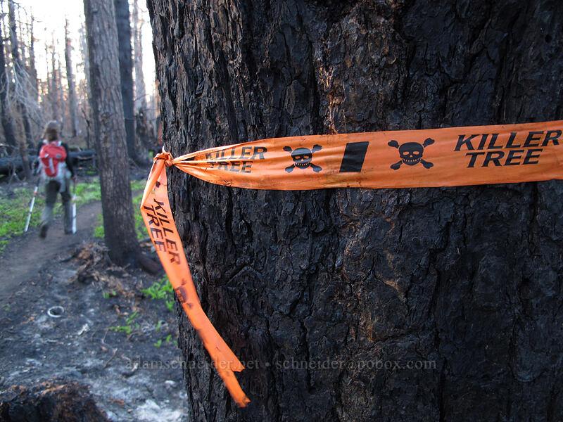 Killer Tree [Vista Ridge Trail, Mt. Hood Wilderness, Oregon]