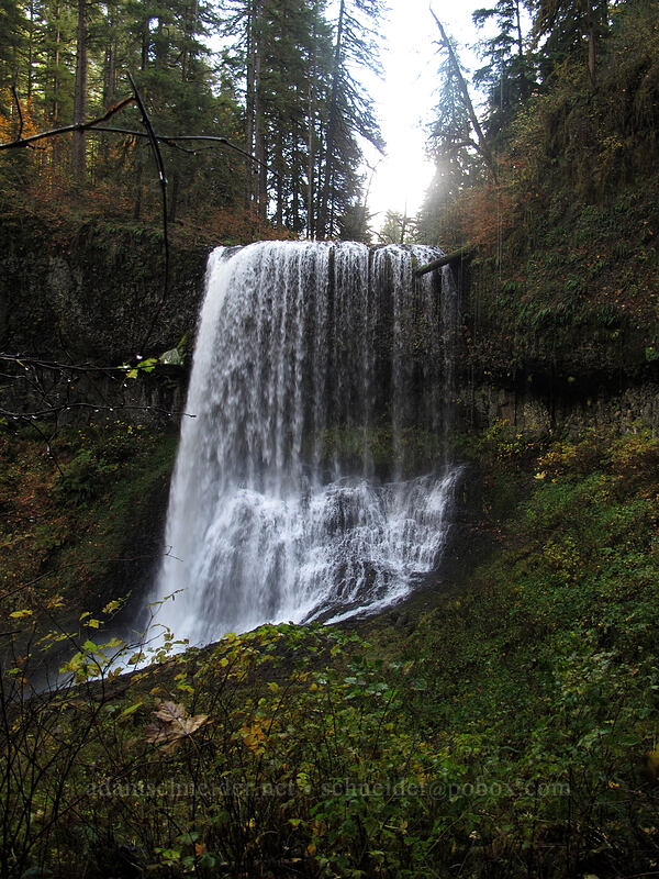 Middle North Falls [Canyon Trail, Silver Falls State Park, Oregon]