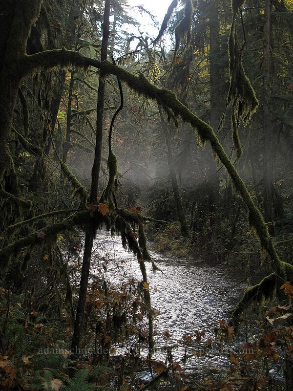 fog [Canyon Trail, Silver Falls State Park, Oregon]