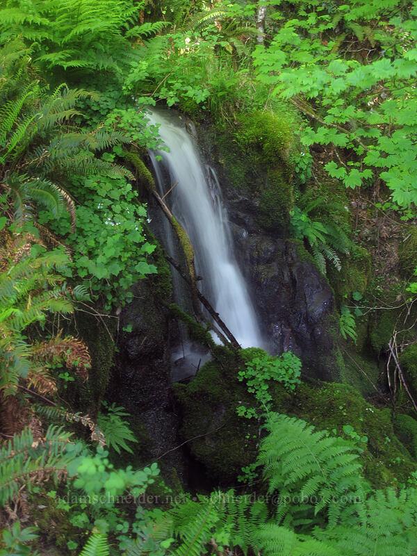 Hardy Falls [Hamilton Mountain Trail, Beacon Rock State Park, Washington]