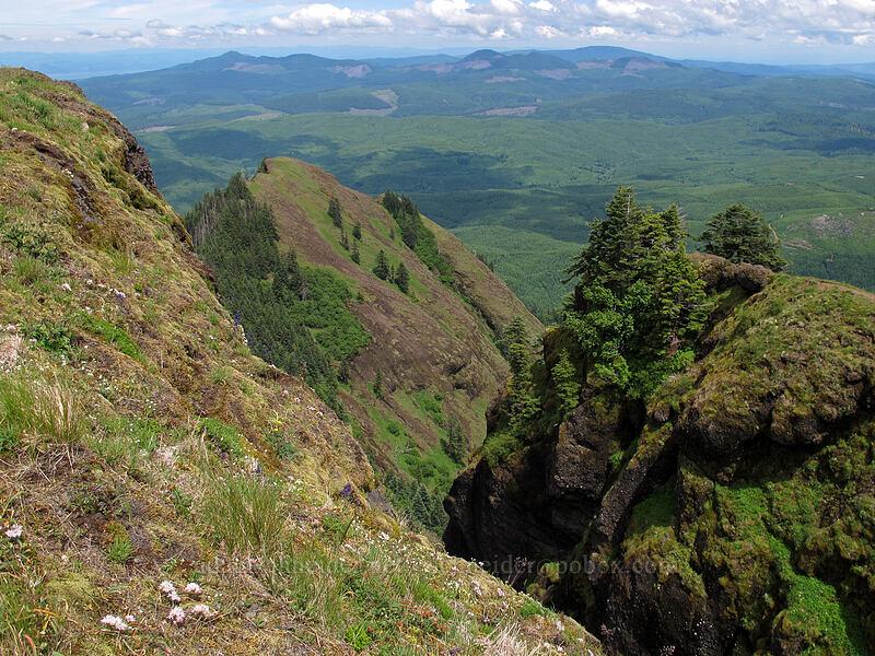 north side of Saddle Mountain [Saddle Mountain Trail, Clatsop County, Oregon]