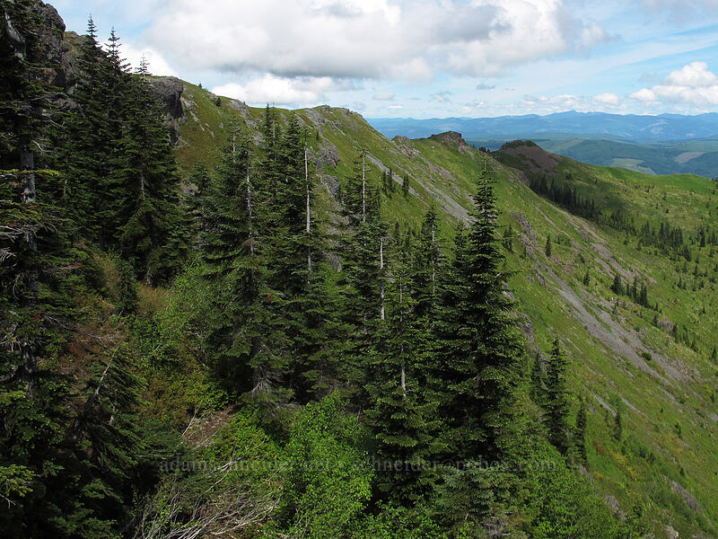 east side of Silver Star Mountain [Ed's Trail, Silver Star Mountain, Gifford Pinchot Nat'l Forest, Washington]