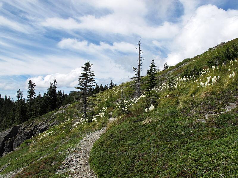 beargrass (Xerophyllum tenax) [Ed's Trail, Silver Star Mountain, Gifford Pinchot Nat'l Forest, Washington]