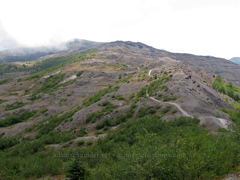 the trail [Boundary Trail, Mt. St. Helens National Volcanic Monument, Washington]