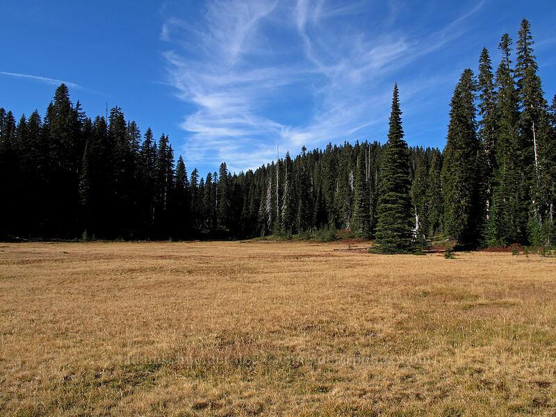 big flat meadow [Indian Heaven Trail, Indian Heaven Wilderness, Washington]