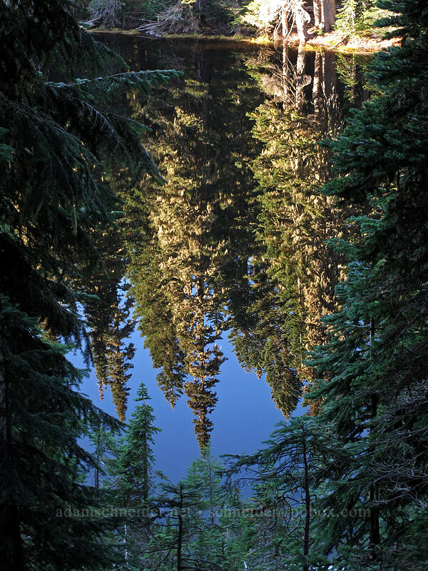 fir trees, reflected [Pacific Crest Trail, Indian Heaven Wilderness, Washington]