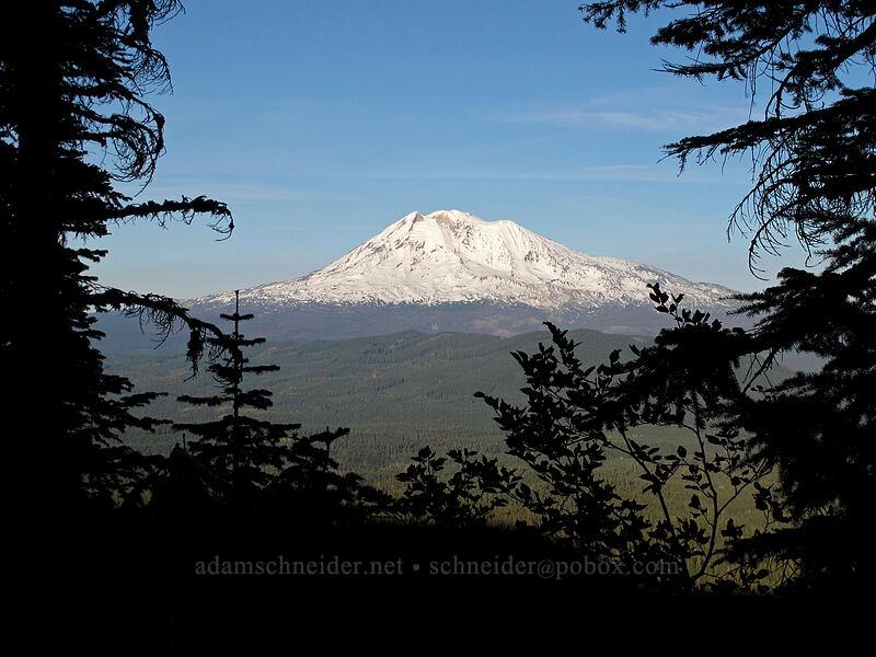 Mt. Adams [Cultus Creek Trail, Indian Heaven Wilderness, Washington]