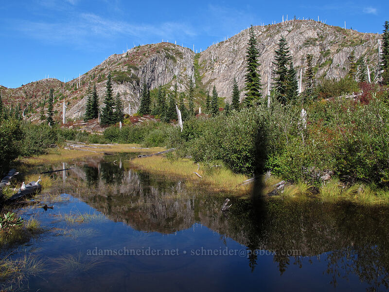 pond near Twin Lakes [Lakes Trail, Mt. St. Helens National Volcanic Monument, Washington]
