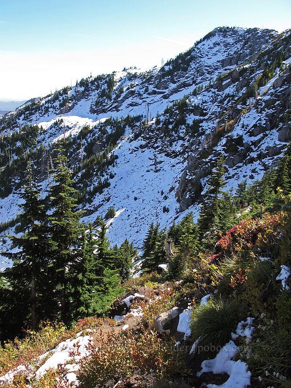 north side of Whittier Ridge [Mt. Whittier Trail, Mt. St. Helens National Volcanic Monument, Washington]