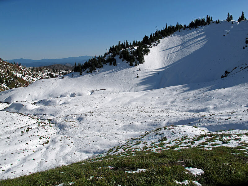 snowy basin filled with animal tracks [Boundary Trail, Mt. St. Helens National Volcanic Monument, Washington]
