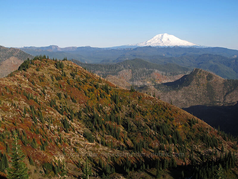fall colors & Mt. Adams [Boundary Trail, Mt. St. Helens National Volcanic Monument, Washington]