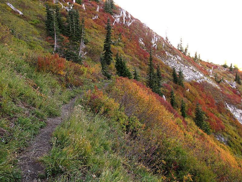 fall colors [Boundary Trail, Mt. St. Helens National Volcanic Monument, Washington]