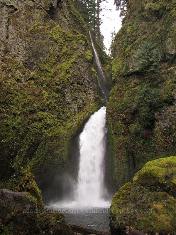 Wahclella Falls [Wahclella Falls Trail, Columbia River Gorge, Oregon]