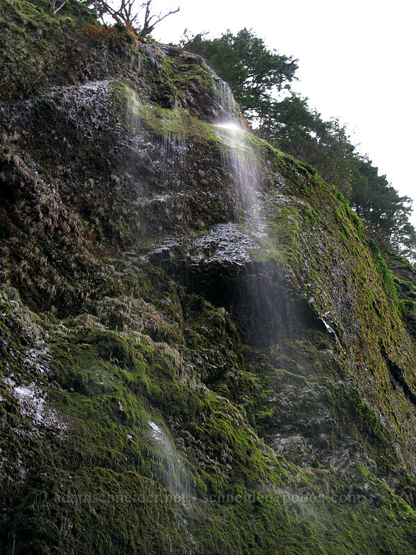 water drizzling down cliffs [Tanner Creek Valley, Columbia River Gorge, Oregon]