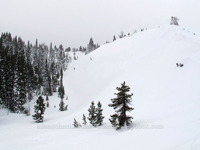 steep gully [White River Canyon, Mt. Hood National Forest, Oregon]