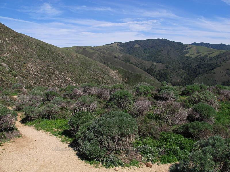 Soberanes Canyon [Rocky Ridge Trail, Garrapata State Park, California]