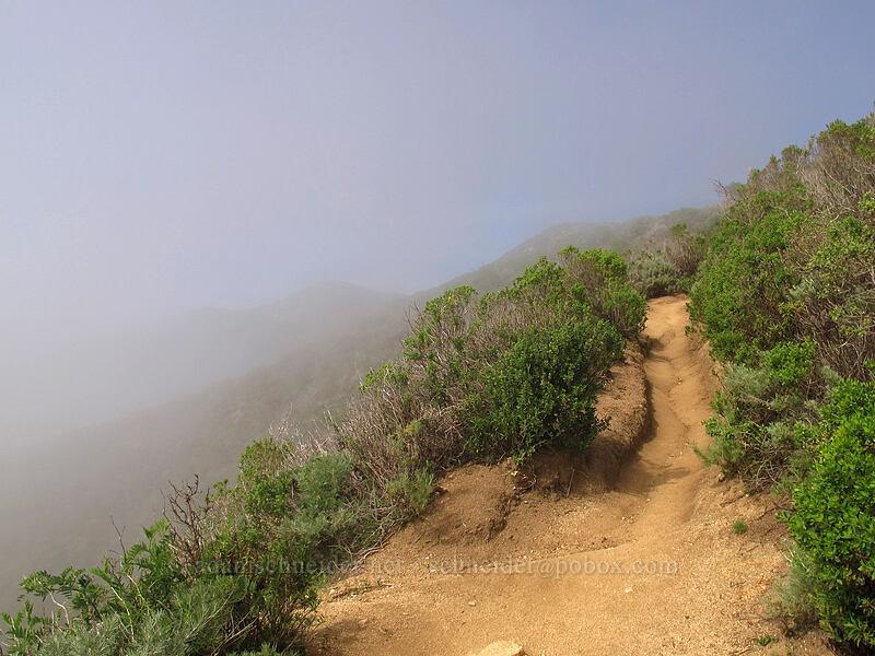 sun and fog [Rocky Ridge Trail, Garrapata State Park, California]