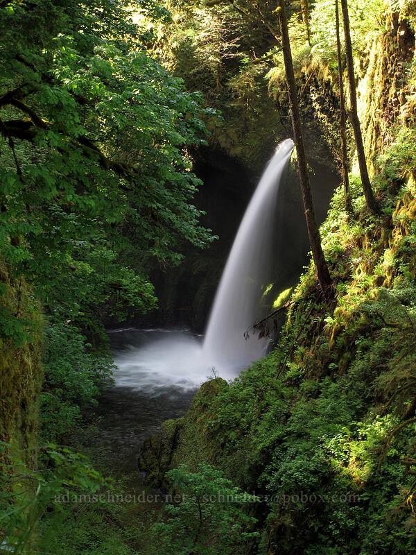 Metlako Falls [Eagle Creek Trail, Columbia River Gorge, Oregon]