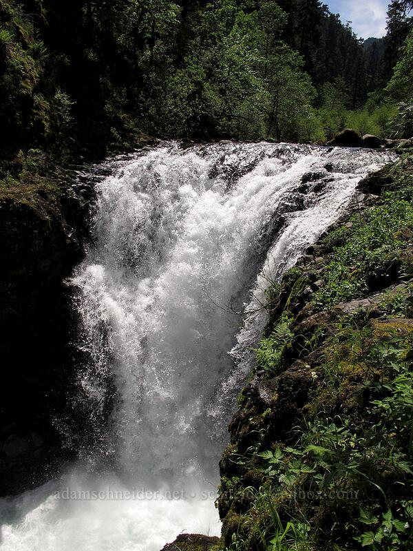 Skoonichuk Falls [Eagle Creek Trail, Columbia River Gorge, Oregon]