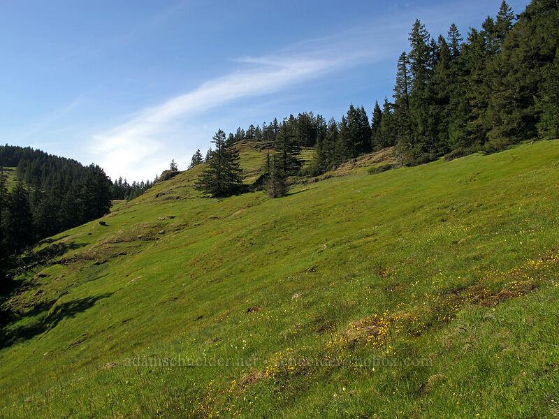 southeast meadows of Horse Rock Ridge [Horse Rock Ridge, Linn County, Oregon]