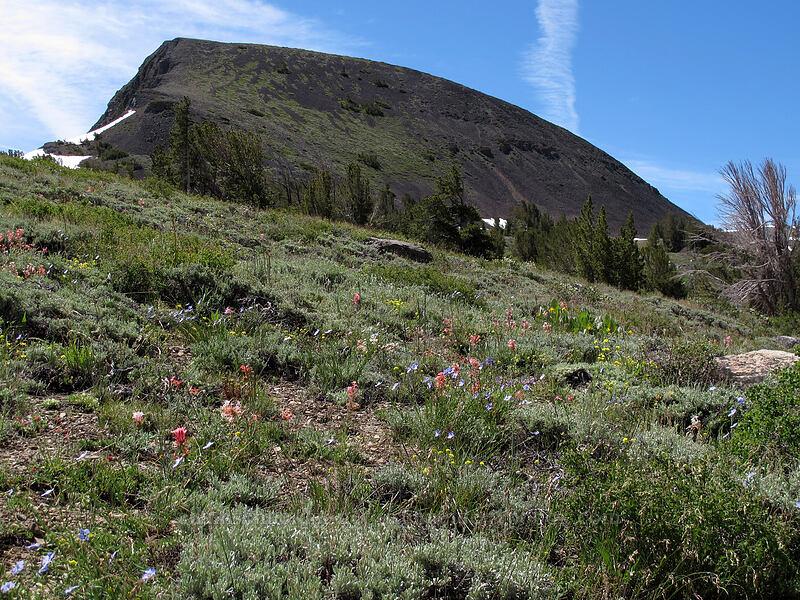 Elephant's Back & wildflowers [Pacific Crest Trail, Mokelumne Wilderness, California]
