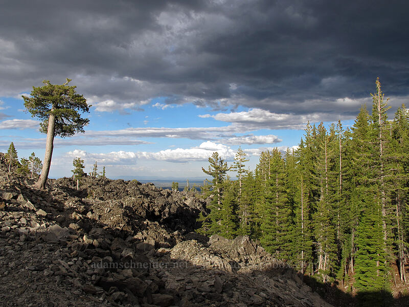 edge of the lava flow [Glass Mountain, Modoc National Forest, California]